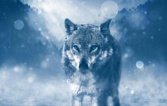 Il lupo cattivo